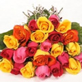 24 Coloured Rose
