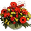 Red Daisies in Basket.